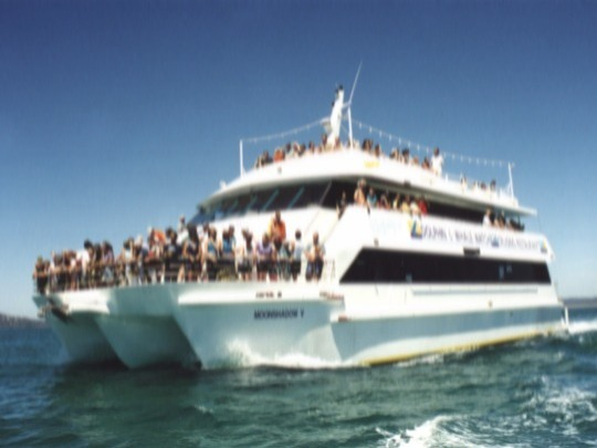 Join a 3hr Whale Watch cruise with Moonshadow-TQC and combine with a Port Stephens 4WD Sandboarding Adventure!